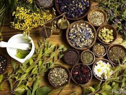 Лекарственные травы (1)