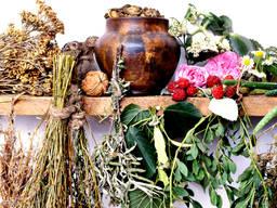 Лекарственные травы (5)