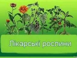 Лекарственные травы.Лікарські трави.