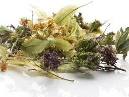 Лекарственные травы в ассортименте