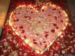Лепестки роз для романтического вечера