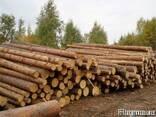 Лес кругляк от 20 см