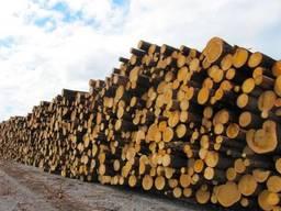Купуємо дрова-кругляк в Черкаській області