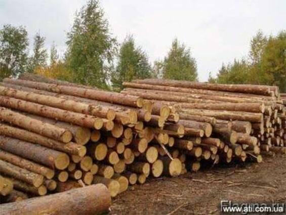 Лес кругляк сосна от 20 см