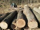 Лес кругляк тополь, клен итд - фото 2