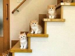 Лестницы сварные для Вас в Одессе