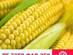 ЛГ 3258 кукуруза купить, ЛГ 3258 цена