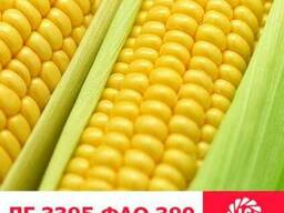 ЛГ 3395 кукуруза купить, ЛГ 3395 цена