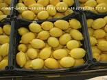 Лимоны оптом (Турция). Лучшее предложение в Украине. Звоните - фото 1