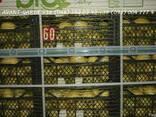 Лимоны оптом (Турция). Лучшее предложение в Украине. Звоните - фото 3