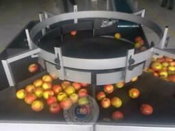 Линия для мойки и сортировки яблок по размеру