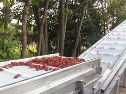 Линия для обработки ягод