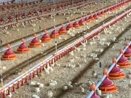 Линия кормления для птицы, линия кормления для бройлеров