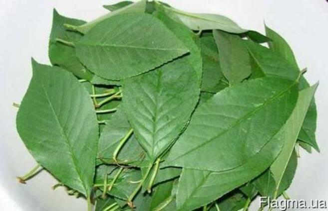 Листья вишни