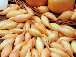 Лук-севок Голиат 10 кг