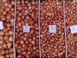 Лук-севок, (сеянка) - продаем по всей Украине