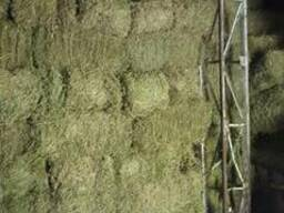 Люцерна зеленая тюк 10кг, доставка по городу