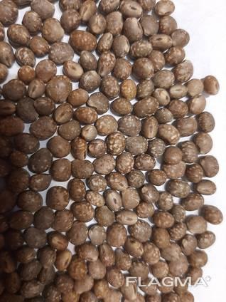 Люпин бобы, для производства колбас или кофе.