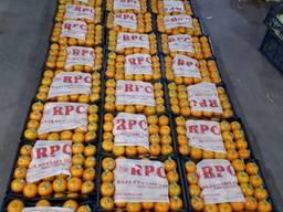 Мандарини Апельсини Пакистан