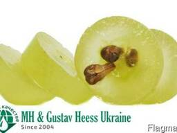 Масло Виноградной косточки раф. /Grape seed oil - Италия