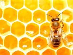 Мед искусственный ведро 14кг