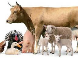 Мел Кормовой для животноводства от Производителя
