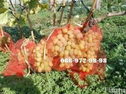 Мешочки на виноград 1 000 шт