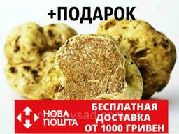 Мицелий белого трюфеля гриб Tuber magnatum семена. ..