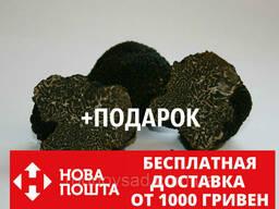 Мицелий чёрного трюфеля гриб Tuber melanosporum семена. ..