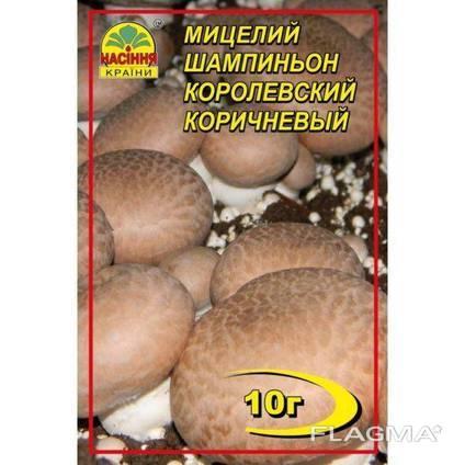 Мицелий гриба Шампиньон королевский коричневый10г