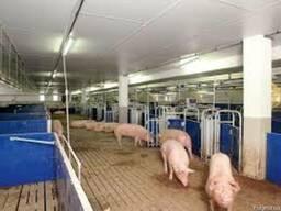 Модернизация животноводческих комплексов