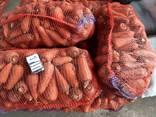 Морковь крупными объёмами оптовая цена 4 грн от 20-ти тонн. - фото 2