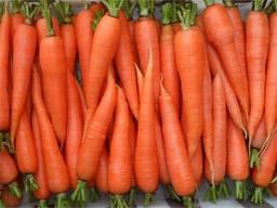 Морковь оптом из Беларуси от производителя