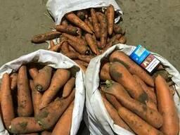 "Морковь ""Танжерина F1"" 1-й сорт"