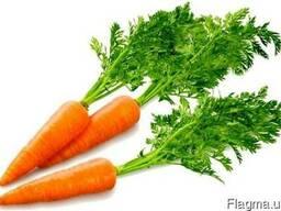 Морковный концентрат пищевой порошкообразный
