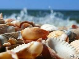 Морская ракушка для пруда та прибрежных территорий