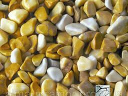 Мраморная галька, желтая Сиена
