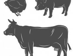 Мясо говядины, свинины, конины, курицы, индюшатины, рыба опт