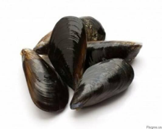 Мясо мидий, мидии в раковинах черноморские живые. Доставка