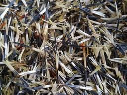 Насіння чорнобривці семена