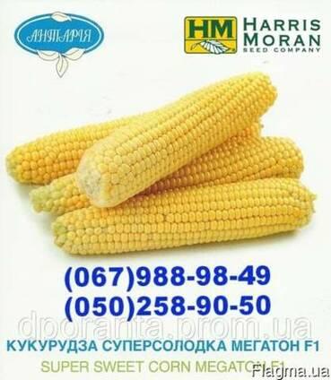 Насіння цукрової кукурудзи Мегатон F1