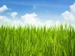 Насіння кормових трав, газонні трави, медоноси та сидерати.
