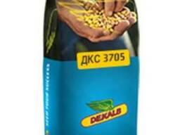 Насіння кукурудзи ДКС 3705
