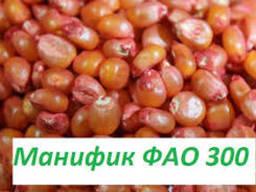 """Насіння кукурудзи """" Маніфік ФАО 300""""( екстра)"""