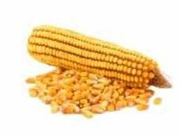 """Насіння кукурудзи """" Муасон ФАО 330""""( екстра)"""