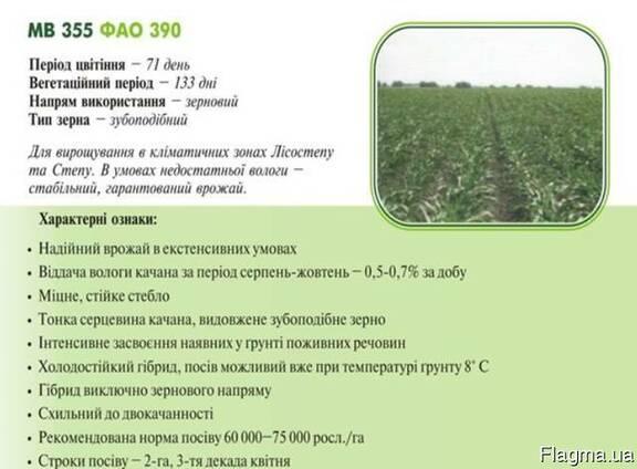 Насiння кукурудзи (семена кукурузы) МВ 355(ФАО 390) Угорщин