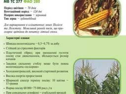 Насiння кукурудзи (семена) МВ ТС 277 (ФАО 280) Угорщина