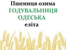 Насіння озимої пшениці Годувальниця Одеська еліта