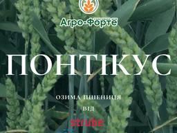 Насіння озимої пшениці Понтікус ( еліта та 1 репрод)