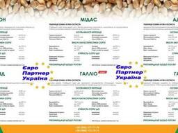 Насіння озимої пшениці Probstdorfer (Балатон, Мідас, Роланд,